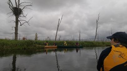 paddle 2017